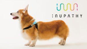Collar inteligente que indica las emociones de los perros